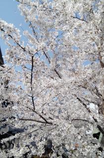 春ですね画像