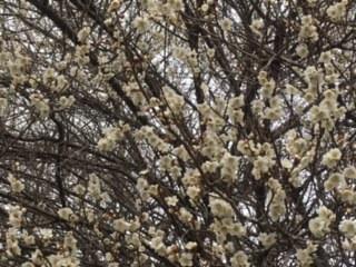 春ですね〜♪画像