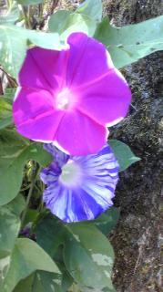 この花何かわかります?画像