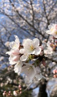 春の知らせ画像