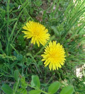 春の花発見画像