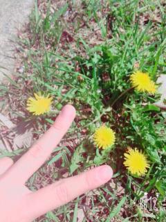 モモナの小春日和♪画像