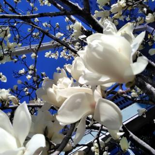 春ですね!画像