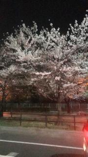 夜桜(ノ´▽`)ノ♪画像