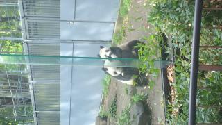 上野動物園♪♪画像