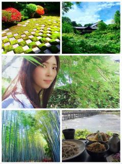 新緑の京都へ画像