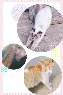 🐱猫になりたい🐱画像