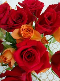 薔薇🌹画像