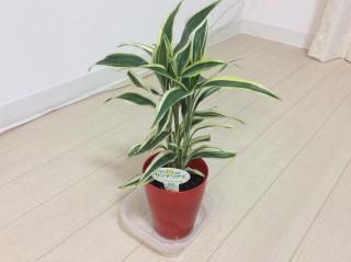 観葉植物☆画像