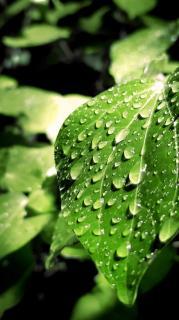 大雨警報画像