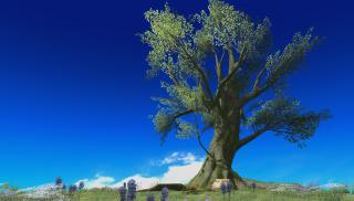 この木何の木動悸の木……画像