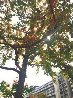 秋の風画像