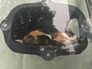 猫カフェ画像