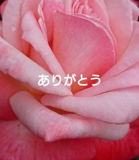 Rose garden画像