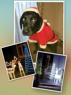 我が家のクリスマスイルミネーション点灯(*^^*)画像