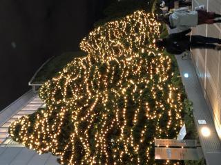 クリスマス近い☆彡.。画像