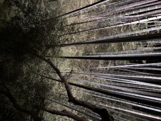 竹のライトアップ画像