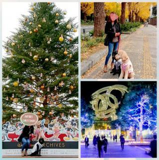街のクリスマス見学行ってきました(*^^*)画像
