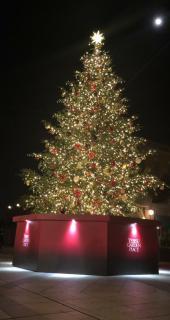 Merry Christmas画像
