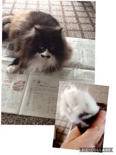 ゆみさんちの猫たち 〜モコくん〜画像