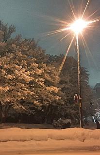 夜桜みたいでしょ?画像