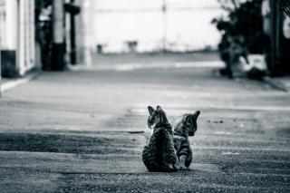猫肌恋しい…画像