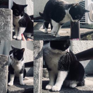 猫と話す🌼画像