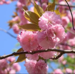 早く春にならないかなぁ画像