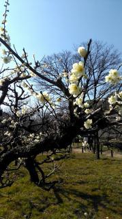 梅の花を見にいってきました♪画像