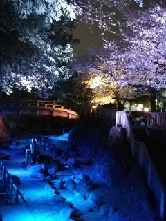 幻想的な世界感の夜桜は王子駅北改札30秒画像