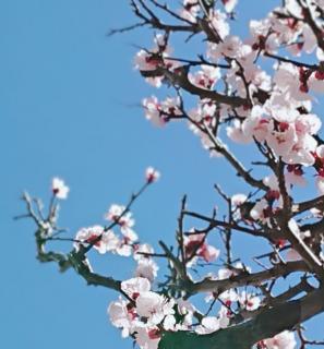 春ですね♪画像
