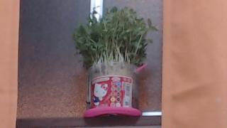 ウチの観葉植物画像