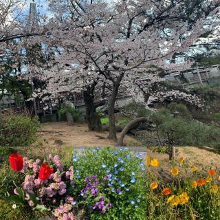 春だーーーっ!画像