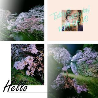 🌸夜桜行ってきました🌸画像
