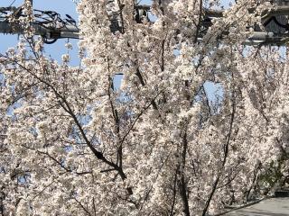 目黒川沿い画像
