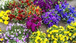 春爛漫♪♪♪画像