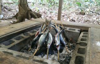 渓流釣り画像