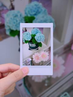 キッチンにアジサイの花〜🌼画像