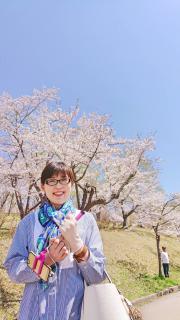 桜巡り🌸画像