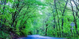 緑のトンネルをぬけて画像
