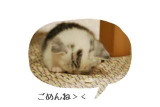 ( 'ω'o[ 7日目 ]o画像