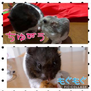 こんばんは(//∇//)