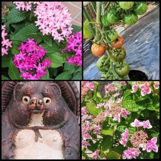 花とたぬき画像