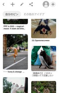 ( 'ω'o[ 46日目]o画像