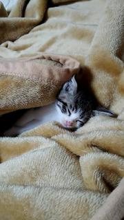 うちに最近きた子猫ちゃん♪画像