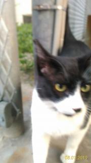 男前な猫ちゃんです画像
