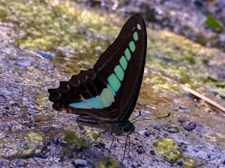 青い蝶画像