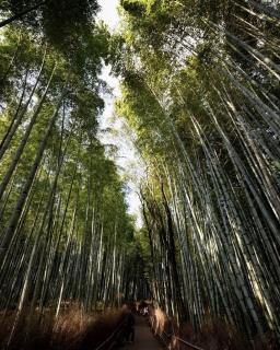 京都観光☆画像