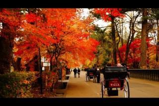 秋ですなぁ画像