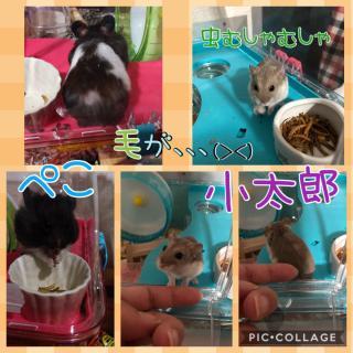 小太郎&ペコ